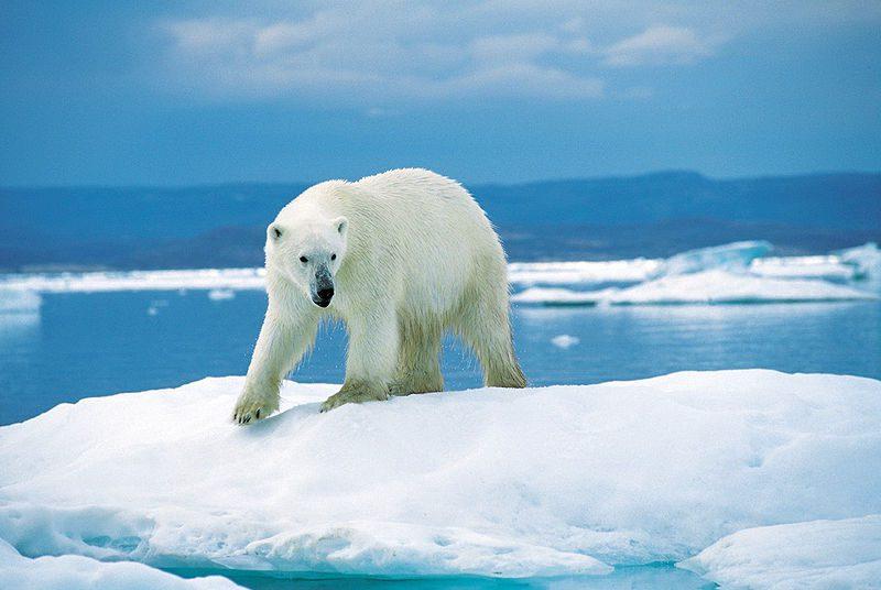 Pôle Nord