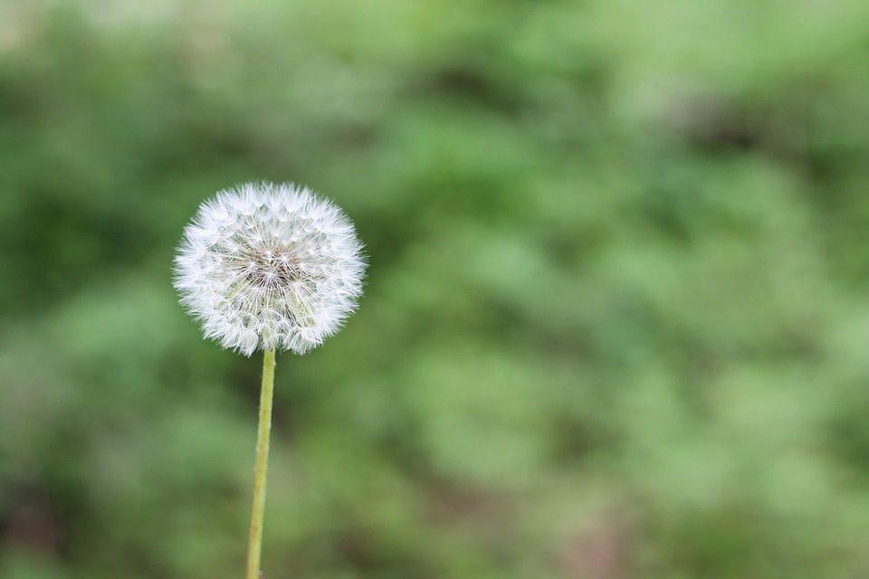 Allergies : une journée indispensable pour chasser les idées reçues