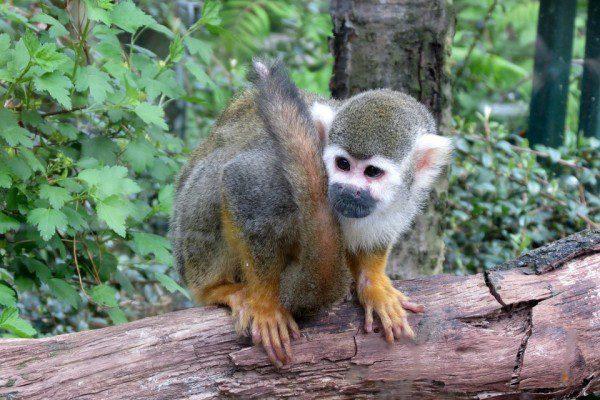 Photo d'illustration d'un singe