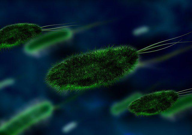 Des bactéries