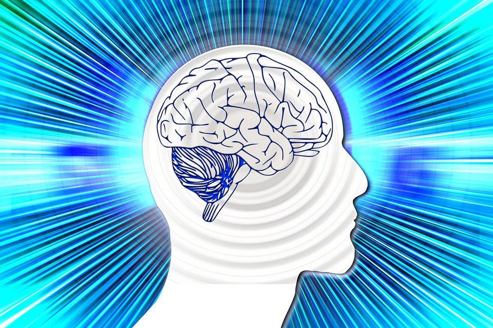 Les plis du cerveau