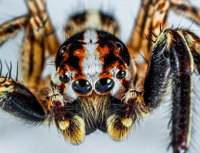 Photo d'illustration d'une araignée