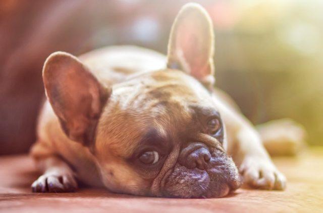 Dormir avec un chien
