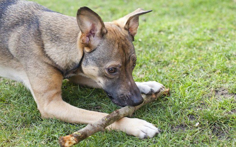 Les chiens peuvent devenir auprès des malades de vrais anti-dépresseurs, une thérapie prometteuse
