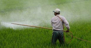 Plus de 90% de la population est contaminé par les pesticides