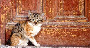 Mordue par un chat errant : une quinquagénaire décède
