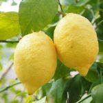L'eau tiède et du citron, le remède considéré comme miraculeux
