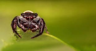 Une araignée particulièrement dangereuse sème la panique en France