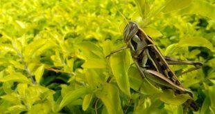 Des insectes au menu, sommes-nous prêts pour ce genre d'alimentation, la découverte sera-t-elle plus forte que le dégoût ?