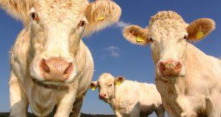 Le ministre de l'Agriculture donne le nom de pesticides et des perturbateurs endocriniens