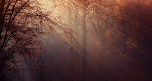 Une Américaine de 26 ans perdue dans les bois en Alabama aux Etats-Unis a réussi à survivre