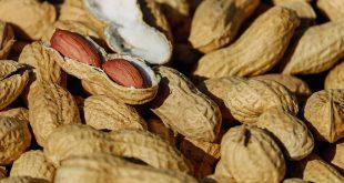 Exposer à l'arachide le plus tôt possible, cela préviendrait des risques d'allergie
