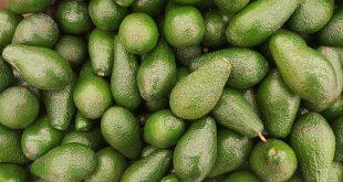 Avocat : des révélations surprenantes sur ce fruit
